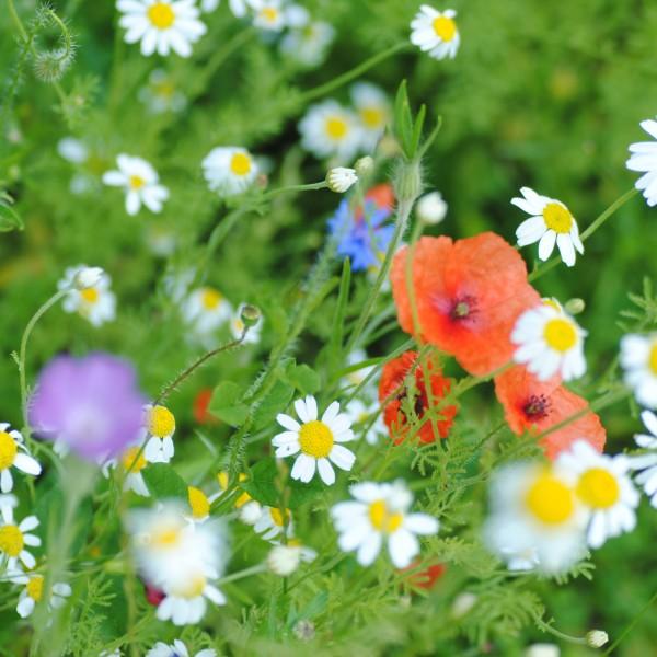 Wildflowers from Wildflower Wedding Favours