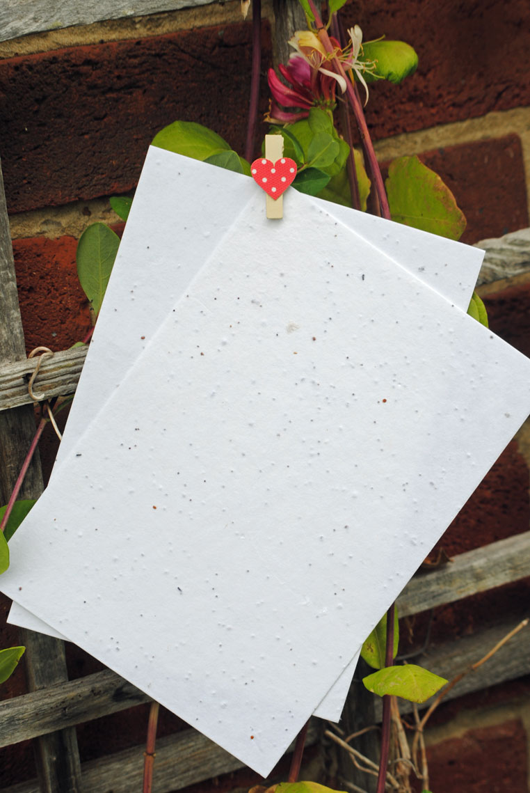 Seed paper | Plantable flower seed paper | Seeded paper