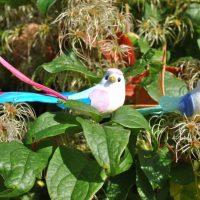 Party birds decorations