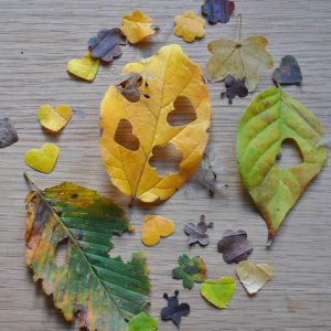 Leaf wedding confetti