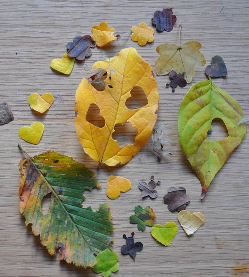 Leaf wedding confetti