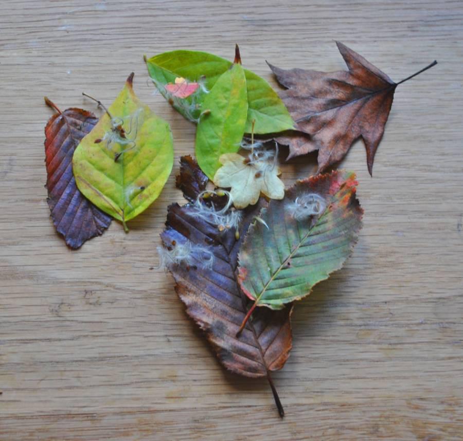 Leaves for making leaf wedding confetti