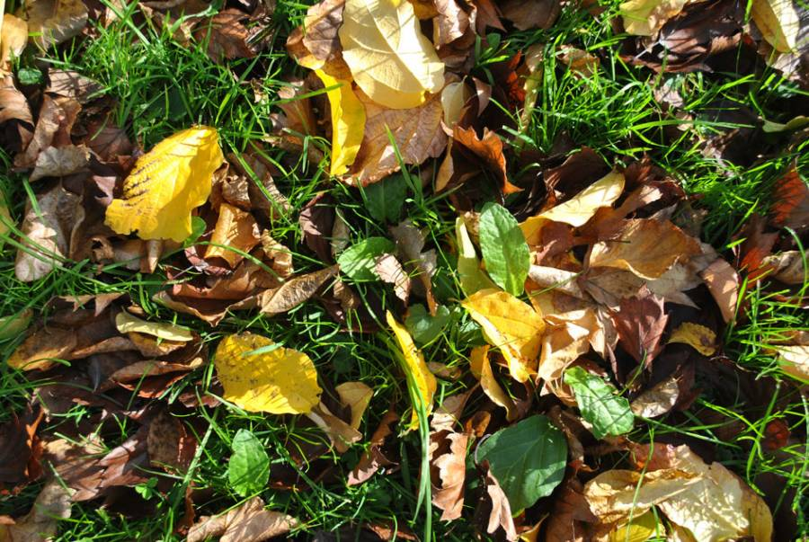 Leaves for making confetti