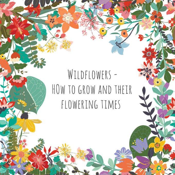 Wildflower Flowering Times calendar