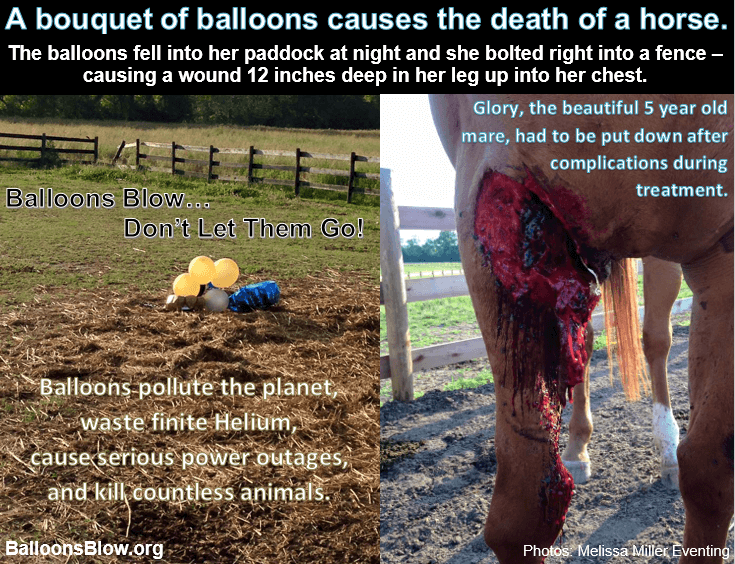 Horse damaged due to balloon release
