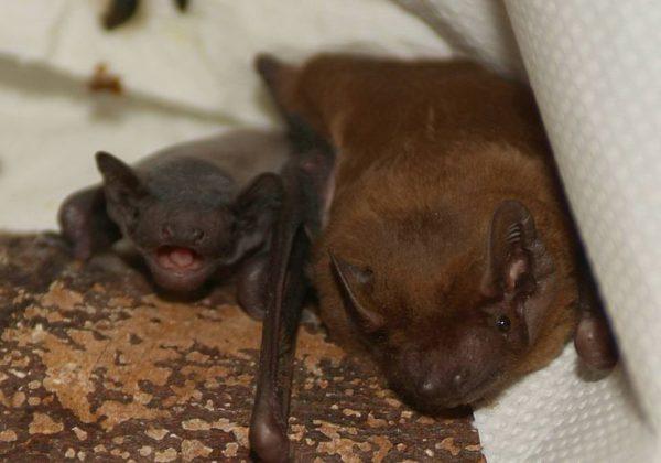 Bat and baby