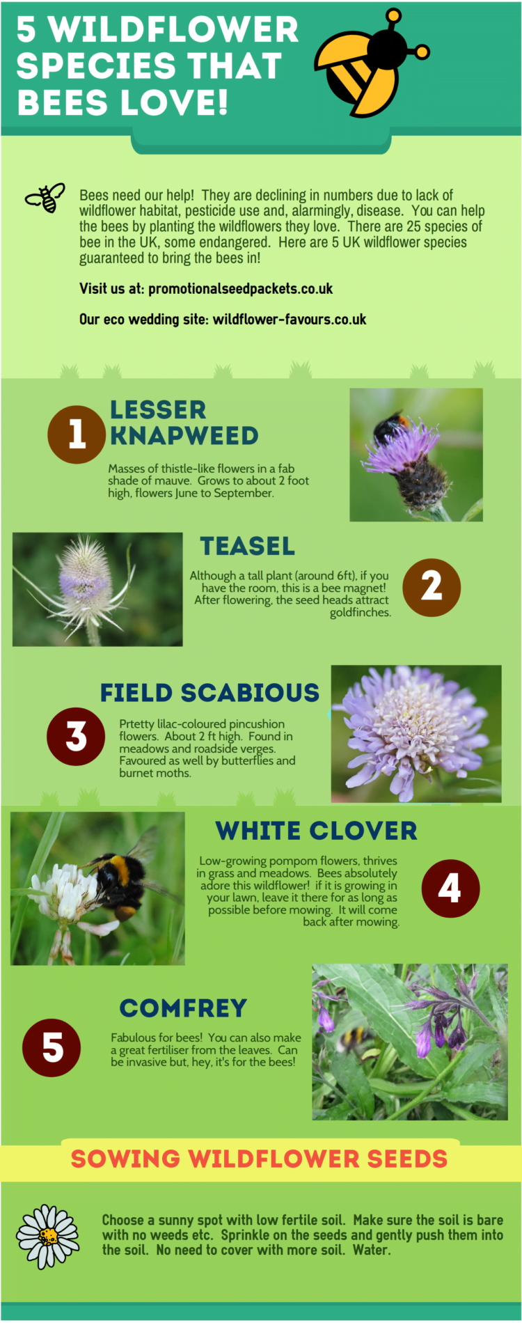 5 wildflowers to attract bees
