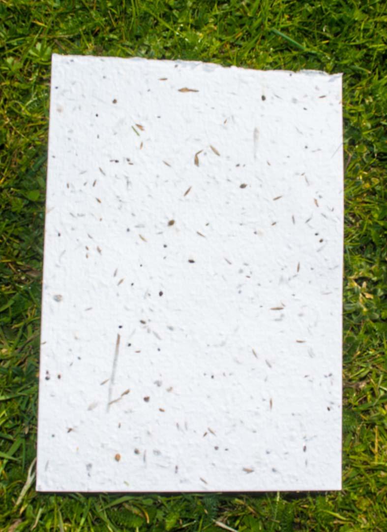 meadow seed paper