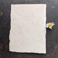 Meadow wildflower seed paper