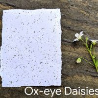 Oxeye Daisy seed paper